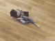 arb_superiore_floor
